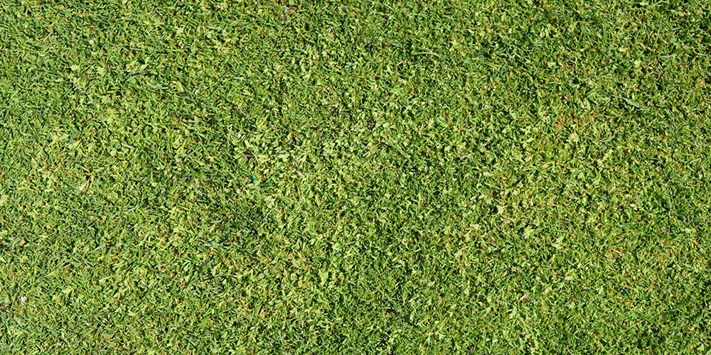 How To Putt on Poa Annua